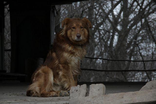 Фото к статье: Дачарайд, 13.04.2011