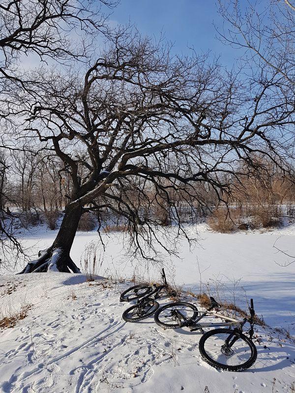 Фото к статье: Зимнее             Репино, 03.02.2019